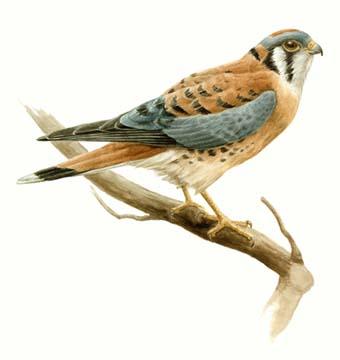 A Bird's Eye View: A Cool-Looking Bird