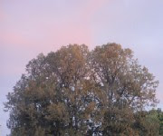 The last rays of sunset shining on my tree.
