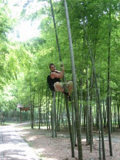 Stories For Speakers And Writers The Amazing Chinese Bamboo Tree