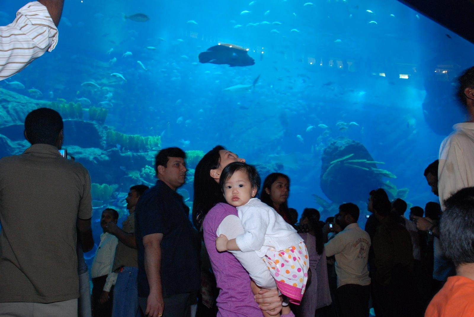 [aquarium+shoppers]