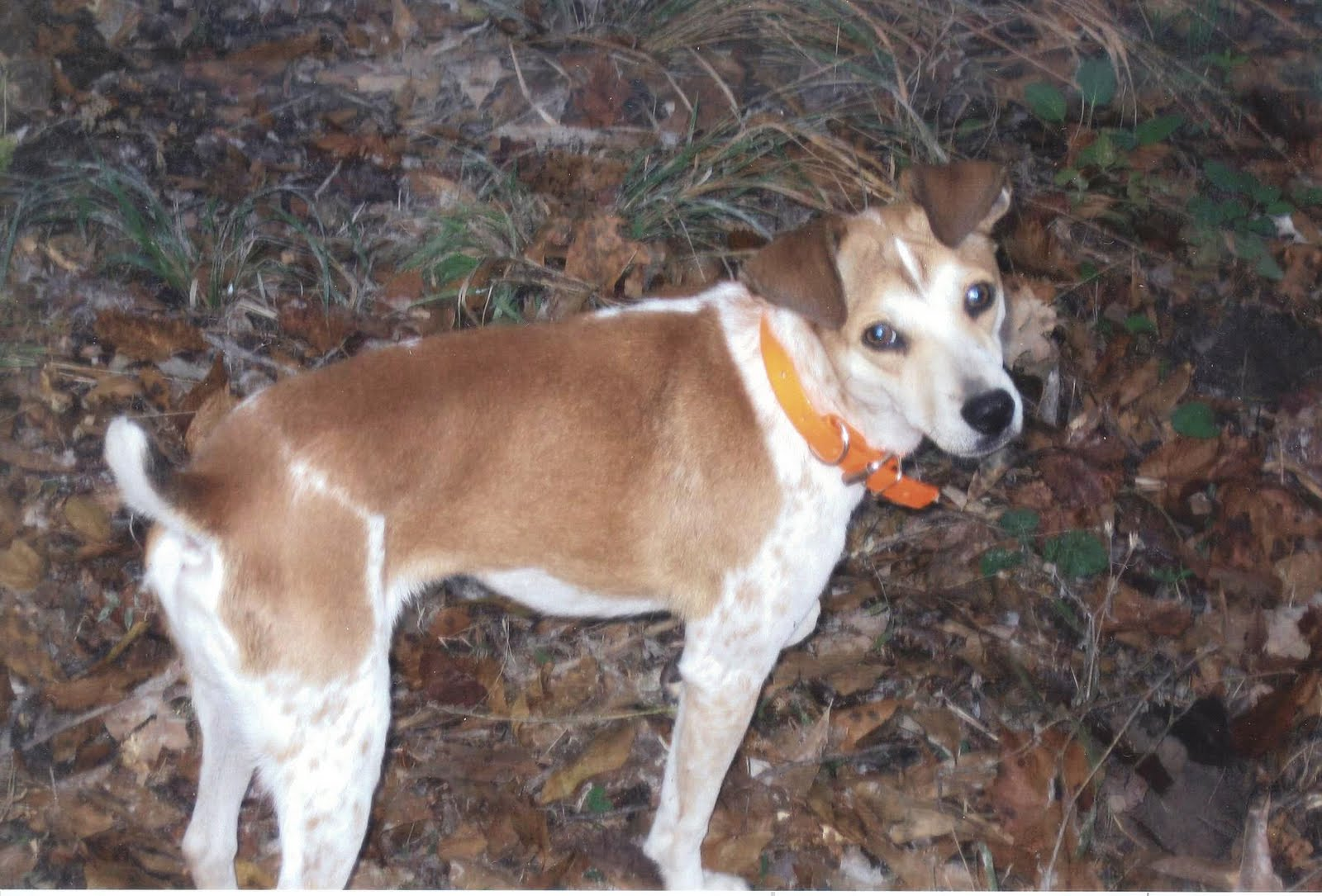 Galla Feist--Squirrel Dog Hunting Photo Gallery: Another Rowdy