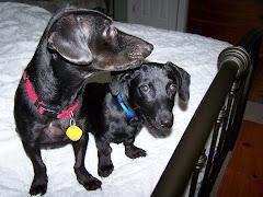 Amos & Auggie
