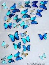 Regalo de Marta... Mi mundo de Mariposas.