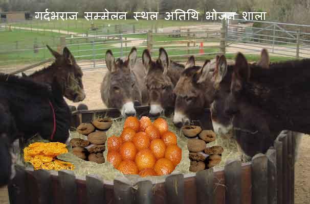 [Donkeys-feeding3.JPG]