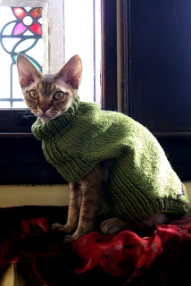Matching Cat And Human Sweaters