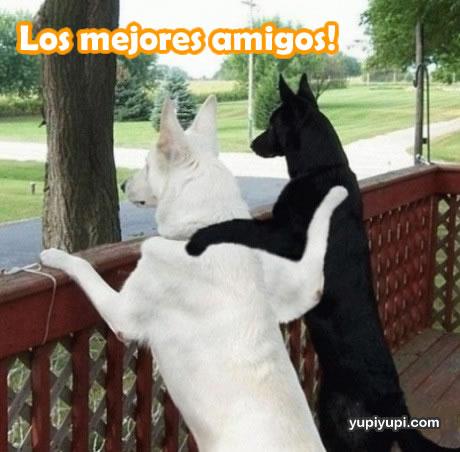 perros y otros animales graciosos