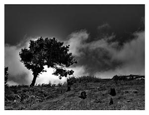 El viejo árbol