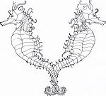 dragons de mer