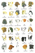 This can explain how today there is plenty of dog breeds