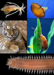 Sites - Biologia
