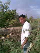 au jardin ,cherche des legumes