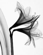 Steven Meyers