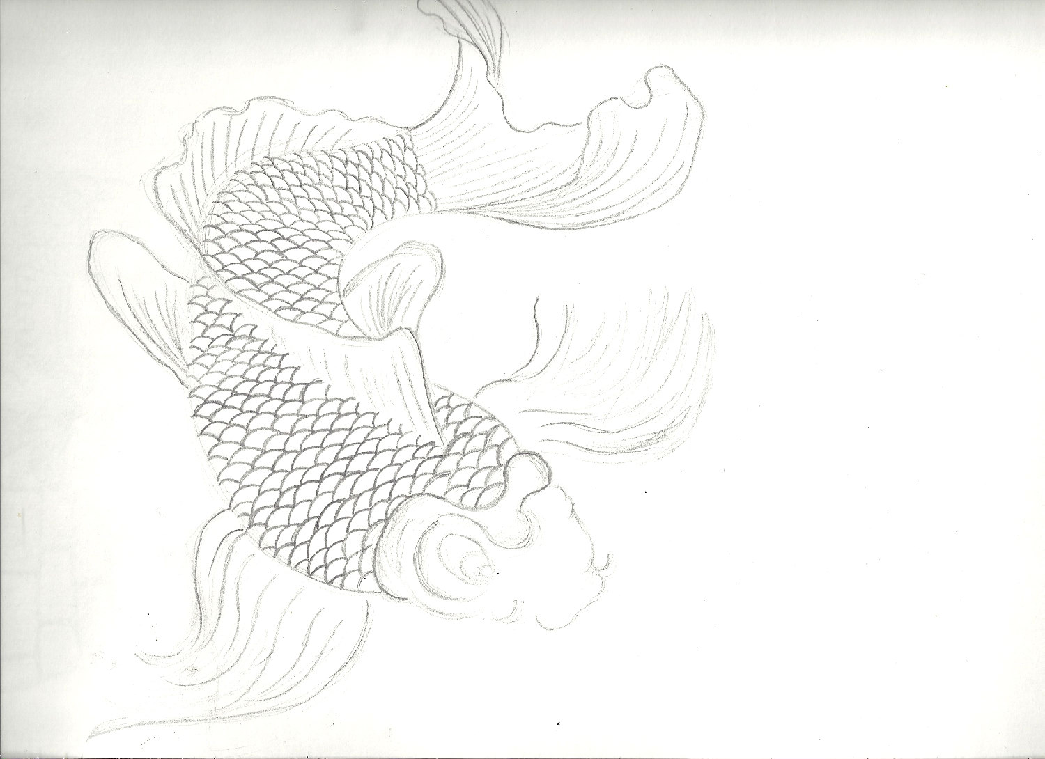 koi fish drawing by keirushii