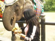 BANGKOK - THAILAND DECEMBER 2008