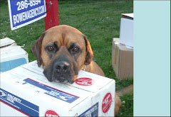Moving Dog Bunsen