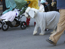More Doggies!