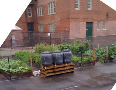 happy healthy balance School Yard Garden in Brooklyn NY