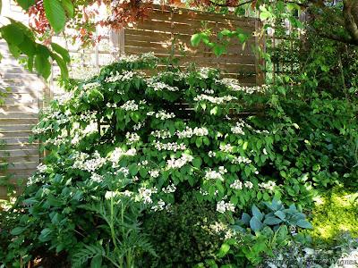 Le jardin des grandes vignes fleurs du jour - L univers du jardin les rues des vignes ...