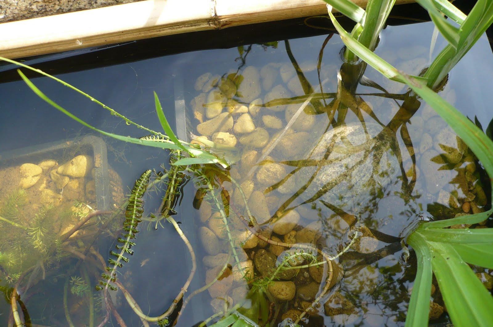 Le jardin des grandes vignes eau au jardin - Bassin de jardin preforme grande taille ...