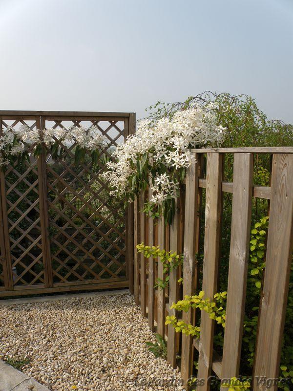 Le jardin des grandes vignes palissade contre haie de for Petit portillon jardin