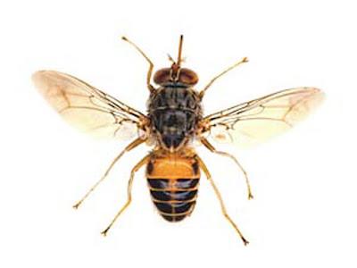 Los insectos mas mortales del mundo