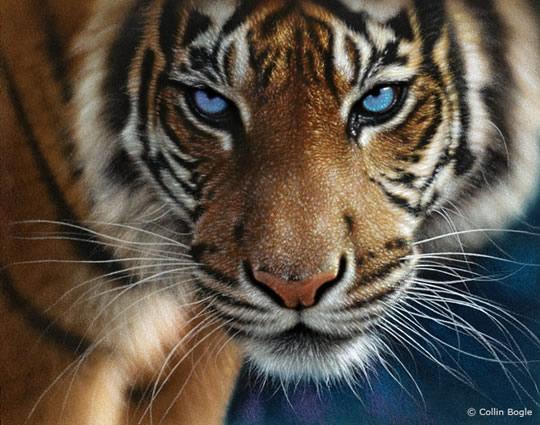 Impressionantes Pinturas de Animais Selvagens - 03
