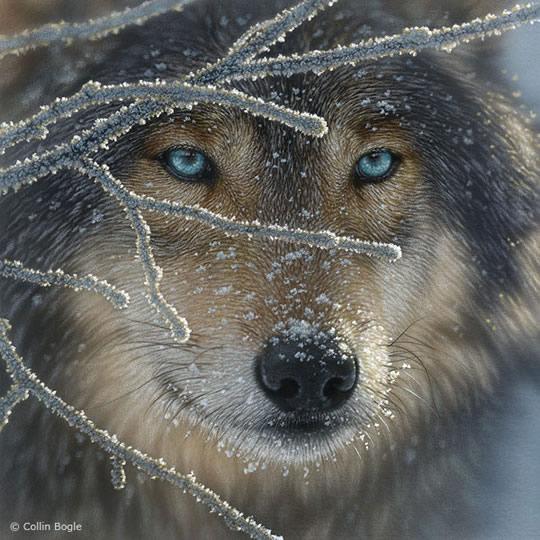 Impressionantes Pinturas de Animais Selvagens - 05