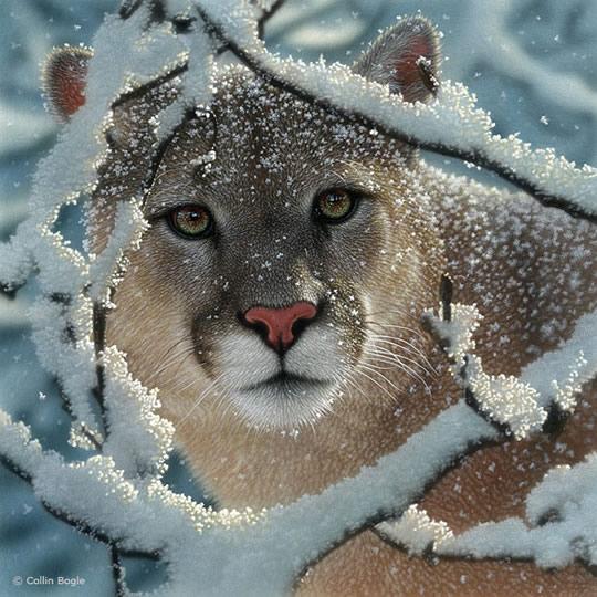 Impressionantes Pinturas de Animais Selvagens - 07