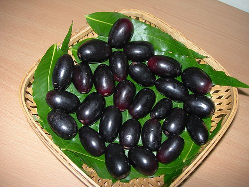 Jambul Evergreen Fruit