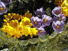 Vårtegn