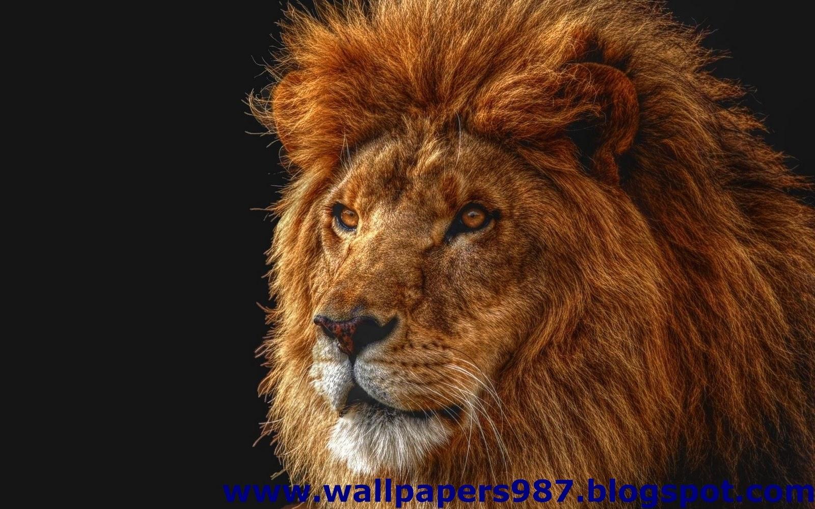 http://1.bp.blogspot.com/_SOSNZoTv8ng/TQYWvyyS3KI/AAAAAAAAAHY/7255onB8sFA/s1600/windows_masaustu_arka_plan_resimleri_vahsi_kediler_aslan_kaplan_HD_HQ_Full_Animal.+Pic+%2528142%2529.jpg