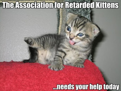 funny cat picture - funny cat pictures-olcat