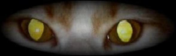 Kamikazze's eyes