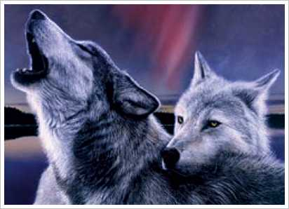 is a beautiful howling wolf. (some might have sense a Dog as well