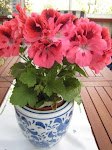 Pelargoner r en favorit hos mig...