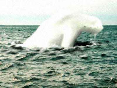 Paranormal & Desconocido - Página 2 Antarctic_humanoid_5