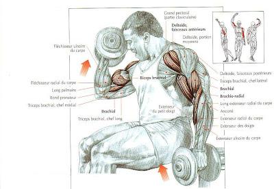 Guide des mouvements de musculation exercice 1 des bras for Guide musculation