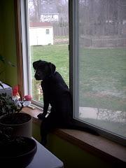 CCI Puppy #4: Arey