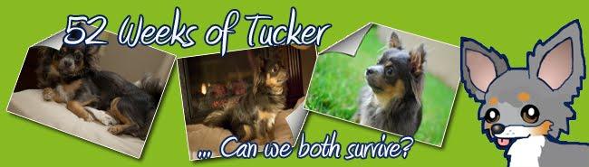 52 Weeks of Tucker