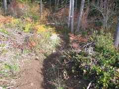 One of Mom's secret mtb trails!