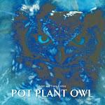 Pot Plant Owl