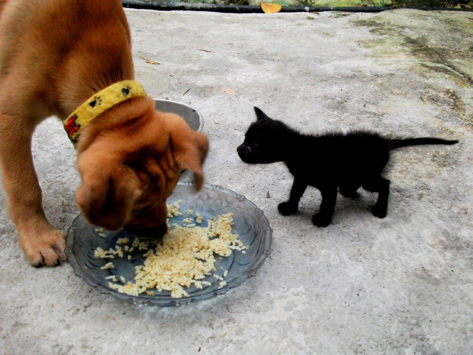 The Meaning Of Life Kucing Terbiar