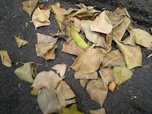 las hojas del sombrero