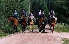 Hästar i backe