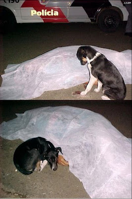 Dog and dead owner