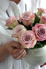Underbara rosor