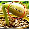 Image:I Love You plant