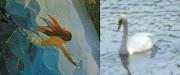 Cisne e Sereia