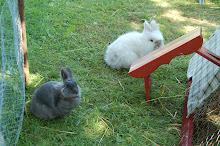Våra Kaniner..
