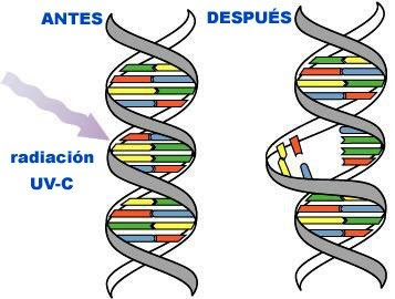 conclusion 3211 describe how the dna Dna structure - conclusion the molecular constituents of the dna structure appear to have optimized chemical properties to produce a stable helical structure capable of storing the information required for the cell's operation.